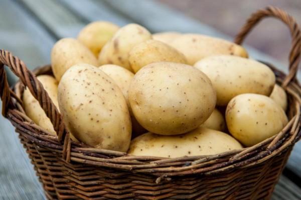 Среднеранние сорта картофеля