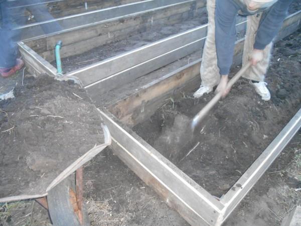 Фото 22. Выкапывается плодородный слой грунта