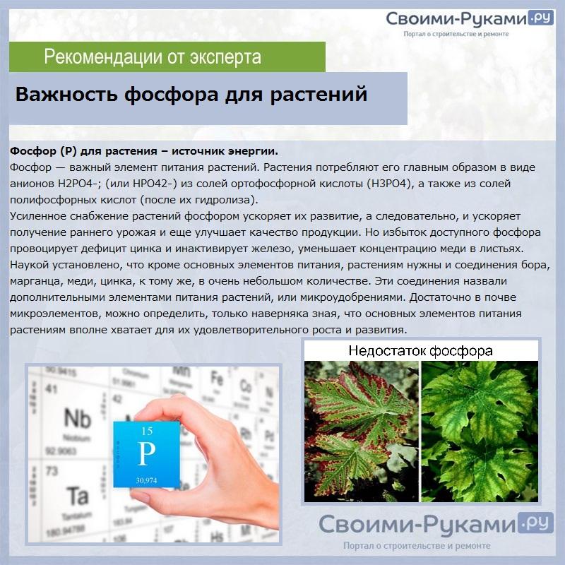 Важность фосфора для растений