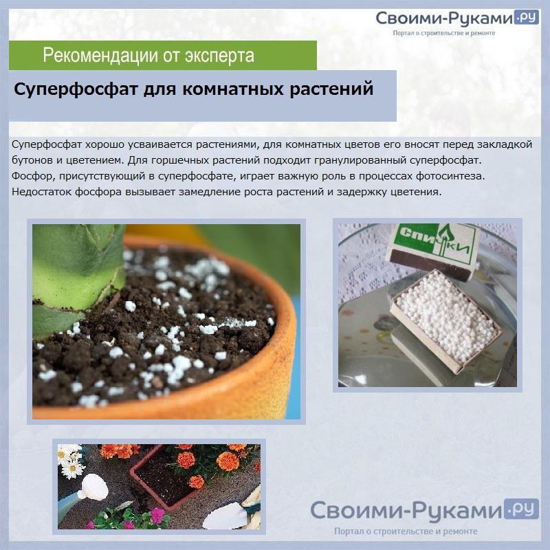 Суперфосфат для комнатных растений