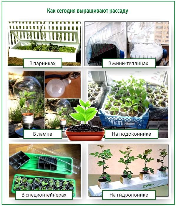 В чем выращивать рассаду для теплицы