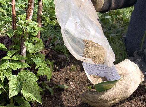 Внесение суперфосфата в почву