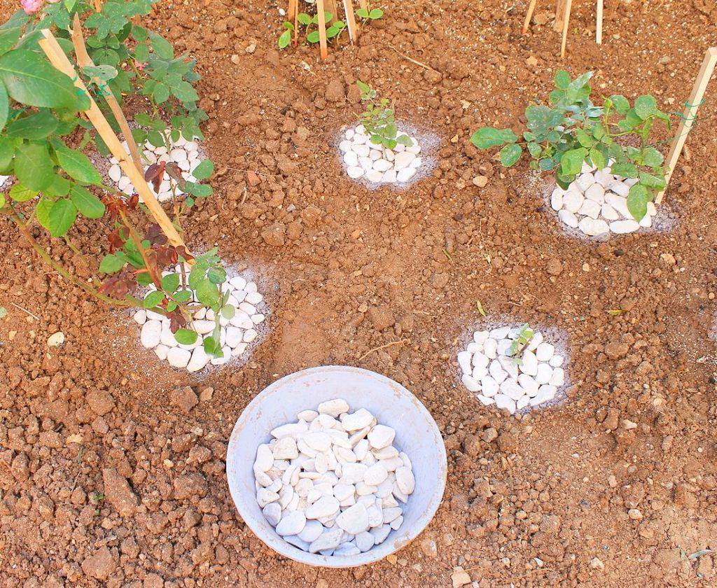 Выкладываем белые камни вокруг растений