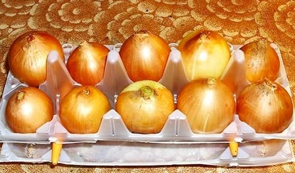 Выращивание лука в контейнере из-под яиц