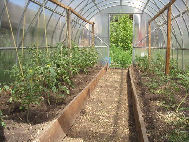 Особенности выращивания овощей в теплице из поликарбоната