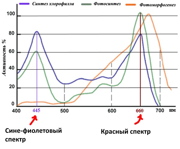 График активности клеток растений при воздействии различных спектров