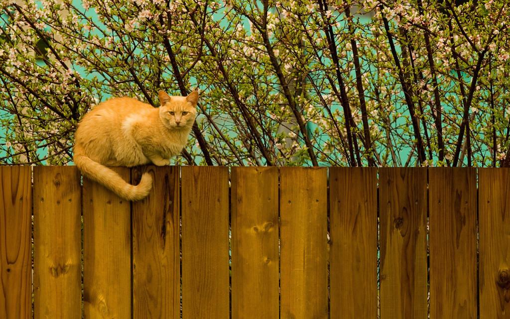 Дешевый забор из дерева