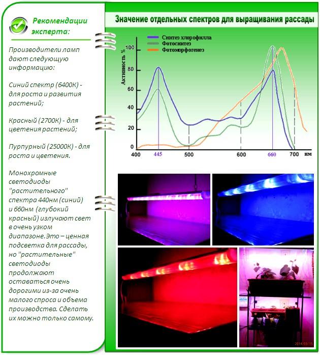 Значение отдельных спектров для выращивания рассады