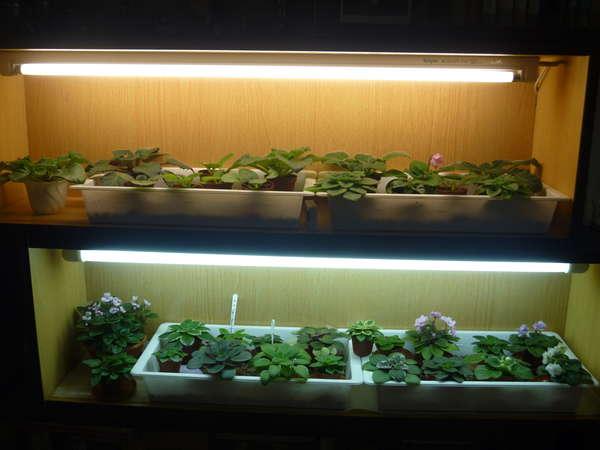 Освещение должно меняться на разных этапах появления ростков