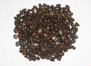 Подготовленные семена