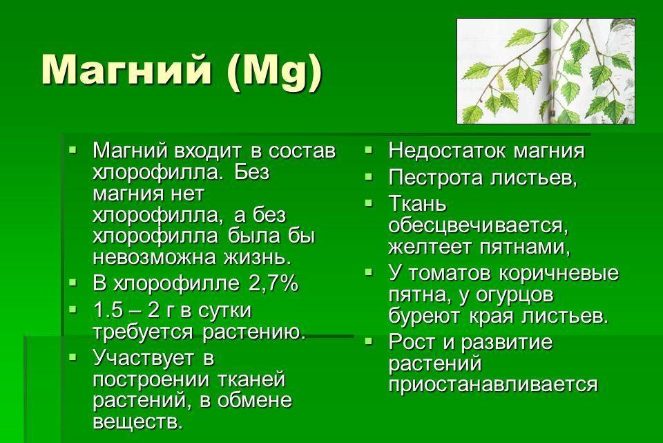 Роль магния в жизни растений