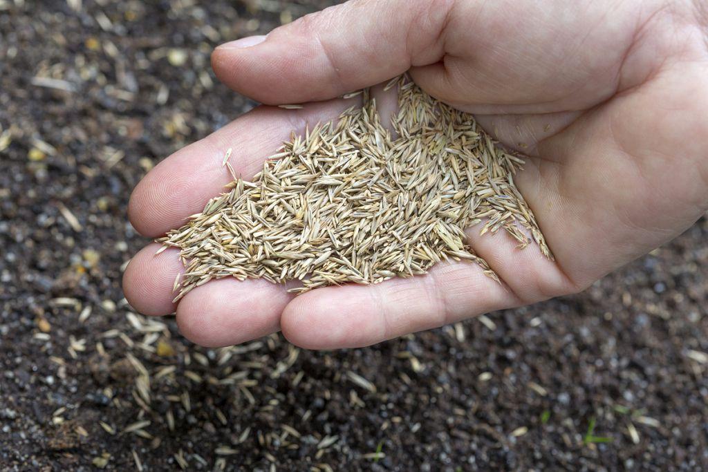 Сеем семена газона на подготовленную почву