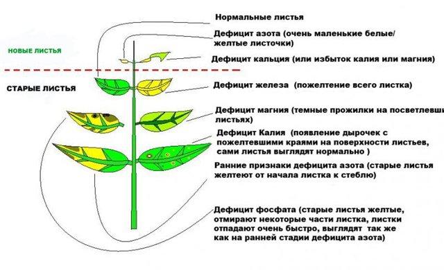 Схема - дефицит микроэлементов у растения