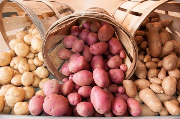 У ранних сортов картофеля много преимуществ