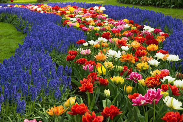 Цветочный ручей из нескольких видов цветов