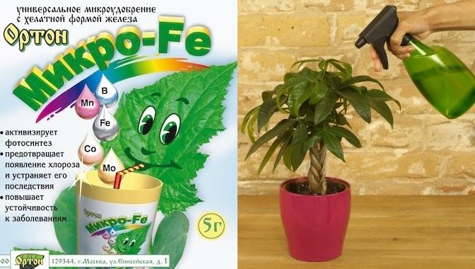 Препараты от хлороза растений