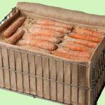 hranenie-korneplodov-morkovi-na-zimu-v-peske