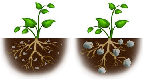Корни растения прорастают в гидрогель