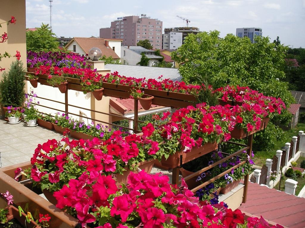 Разнообразные сорта петунии - цветы для южного балкона