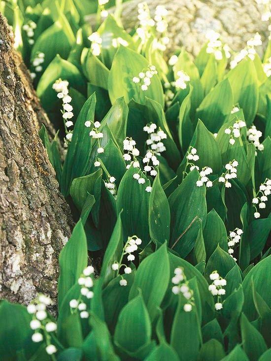 10 самых опасных растений для сада (часть 1)