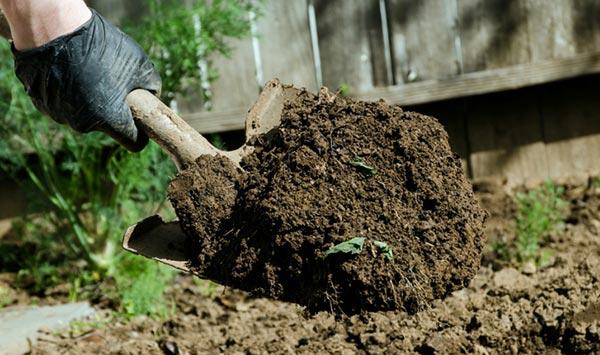обновление-почвы-после-выращивания-помидор
