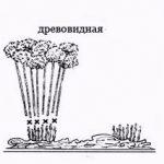 podgotovka-gortenzii-k-zime