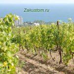 vinigradnik