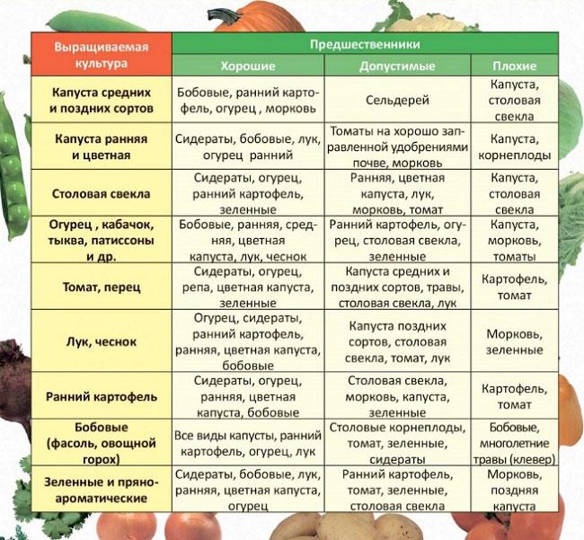 Правила севооборота для томатов