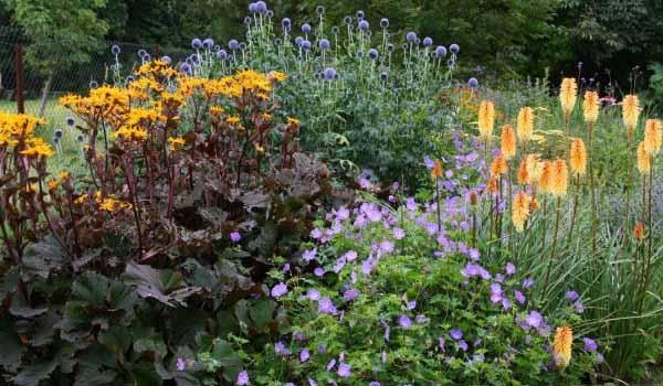 цветы для клумбы цветущей с весны до осени