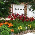 lilii-posadka-8