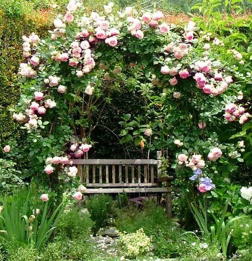 садовые арки из роз фото