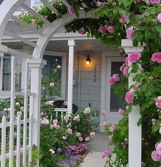 арки из роз у забора