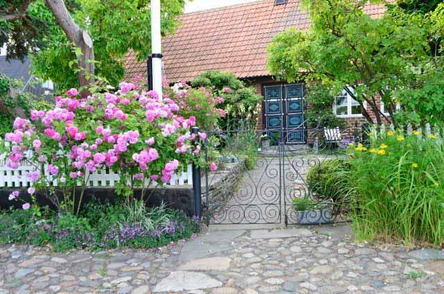 розы в саду как выбрать сорт