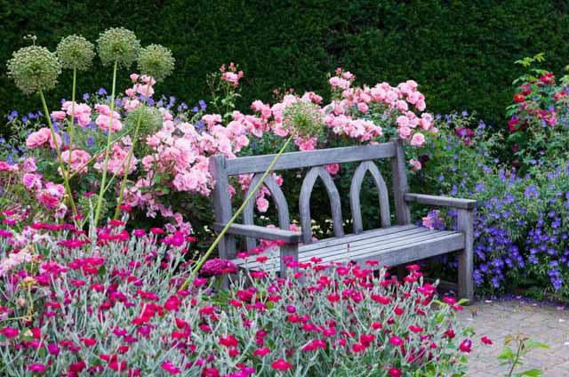 как поливать розы в саду