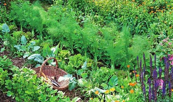 уплотненна-посадка-на-небольшом-огороде
