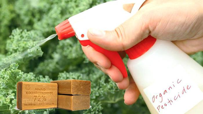 Мыльный раствор - самое популярное народное средство против тли и многих других вредителей