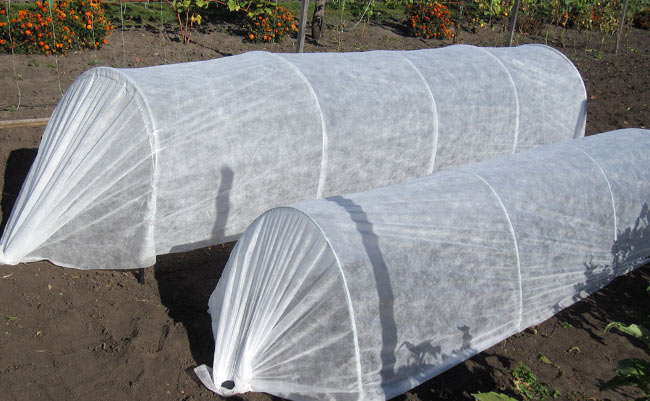 Агроволокно поспособствует прогреванию земли