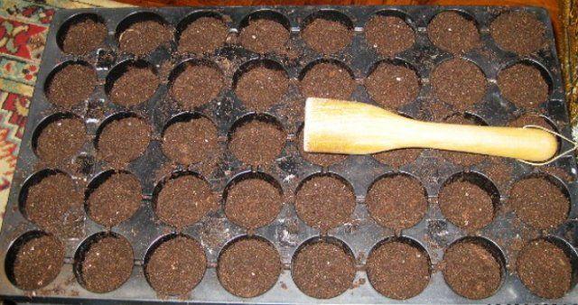 Аккуратно распределите приготовленную почвенную смесь по отсекам