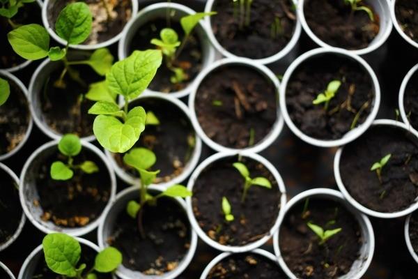 Без вашей помощи растение не сможет быстро вырасти