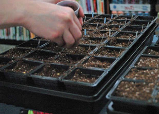 В каждый из отделов кассеты для рассады поместите по семени