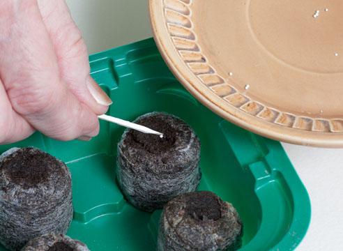 В одну торфяную таблетку кладется только одно семя