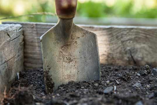 Готовить почву к посадке саженцев следует еще с осени