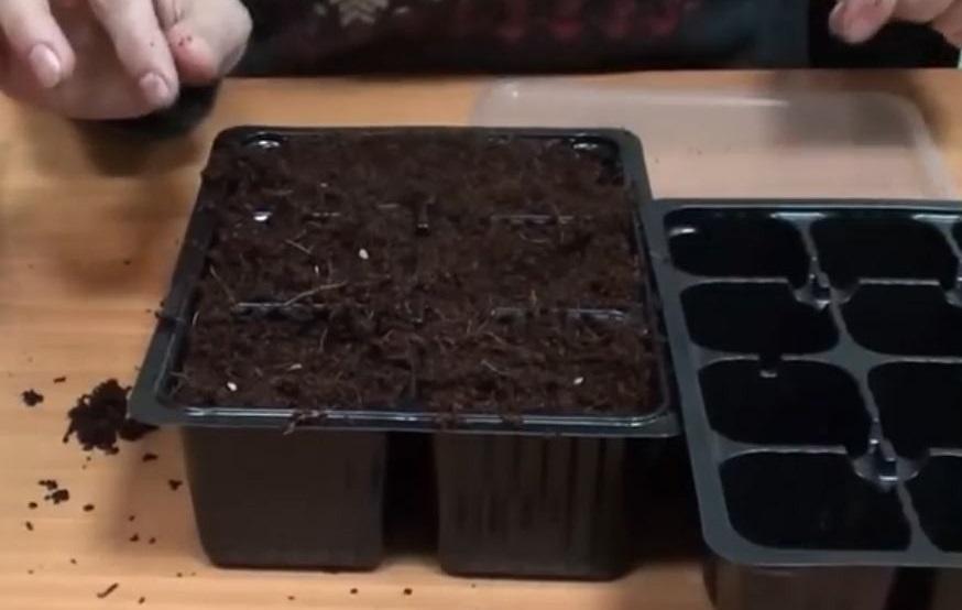 Посаженные семена прикройте сверху грунтом