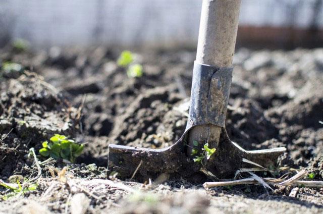 Снятие верхнего слоя почвы позволит подготовить ее к посадке огурцов