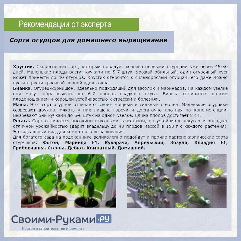 Сорта огурцов для домашнего выращивания