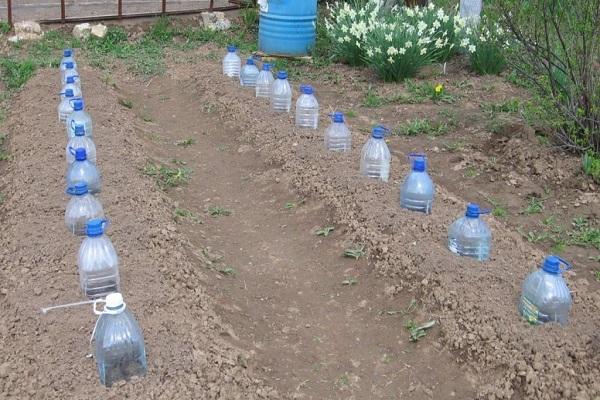 Удобнее всего располагать бутылки с огурцами в виде рядов
