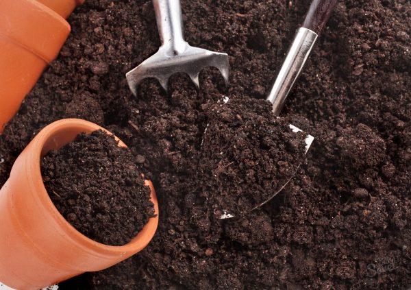 Покупной грунт для рассады полон полезных минеральных элементов