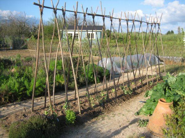 Делайте подпорку для винограда заранее
