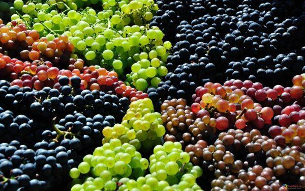 Разнообразие сортов винограда может сбить с толку