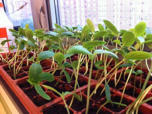 Не ставьте растения под прямые солнечные лучи